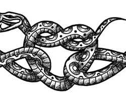 snake heart tattoo 250x223 Disegni Tattoo   Serpenti