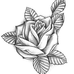 realilstic rose tattoo 250x250 Disegni Tattoo   Rose