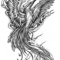 07 black and grey phoenix tattoo 250x250 Disegni tattoo   La Fenice