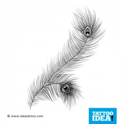 Tatto idea feather4 250x250 Disegni tattoo   Piume
